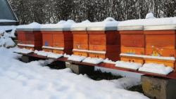 Znate li kako  pčele griju košnicu?