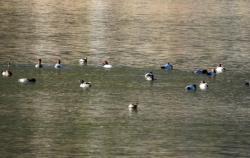 Završen zimski popis ptica u slivu Trebišnjice