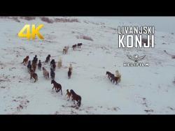 Snježna bajka: Dron zabilježio divlje livanjske konje u trku (VIDEO)