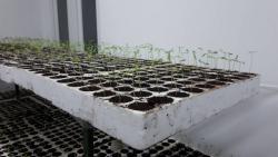 Rasadnik paprike i paradajza u Agrarnom fondu Trebinje