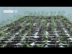 Agrarni fond zasadio rasad paprike i paradajza za poljoprivredne proizvođače (VIDEO)