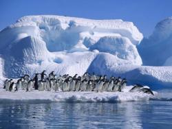 Otkrivena kolonija od milion i po pingvina
