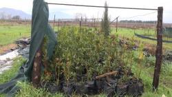Povodom Svjetskog dana šuma podijeljene sadnice