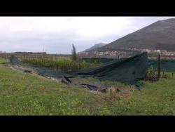 Trebinje: Povodom Svjetskog dana šuma podijeljeno 500 sadnica (VIDEO)