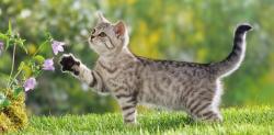 Zašto mačke vole da bježe od kuće?