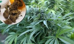 Albanac pokušao da prokrijumčari 22 kilograma marihuane u Trebinje