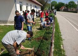 Nevesinje: Mladi zasadili ruže u dvorištima područnih škola