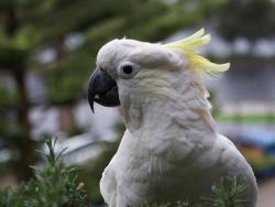 Posvađao se sa papagajem, reagovala policija