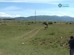 Na putu za katun (VIDEO)