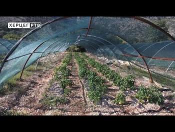 Agrarni fond Trebinje dodjeljuje 50 000 KM poljoprivrednim proizvođačima (VIDEO)