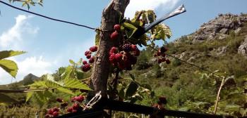Agrarni fond Trebinje: Za 16 mjeseci podržali više od 400 poljoprivrednika