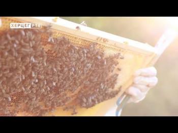 Izuzetno dobra godina za pčelare (VIDEO)