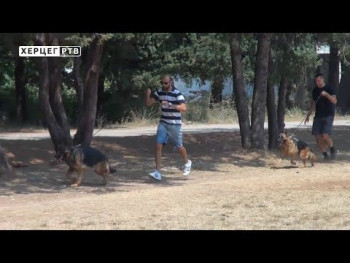 Zana Fidbek i Gari, njemački ovčari iz Trebinja, spremni za svjetske izložbe (VIDEO)