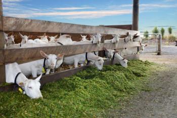 Agrarni fond: Podrška stočarskoj proizvodnji