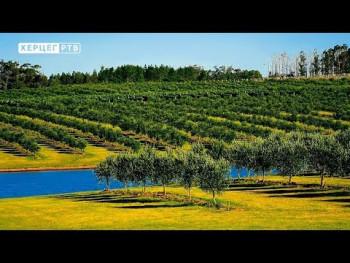 Agrarni fond: Radovi u voćnjaku nakon berbe (VIDEO)