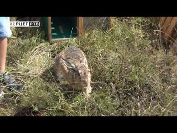 Gacko: Fond divljači obogaćen sa 30 jedinki zeca (VIDEO)