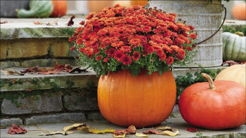 Uselite svu ljepotu jeseni u svoj dom