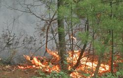 Bileća: Vatrogasci odbranili kuće