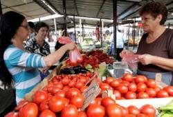 KOGA BRIGA ZA SRPSKOG SELJAKA: Albanski paradajz uništio srpski