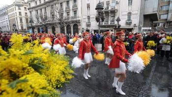 Jubilarni 50. praznik mimoze počinje 1. februara