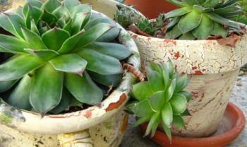 Neuništiva energija: Čaj od ove biljke vam može pomoći kod svih bolova!