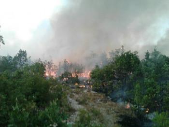 Bileća: Ugašeno 15 požara