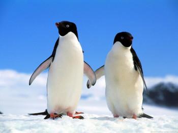 Šta o ljubavi možete naučiti od pingvina?