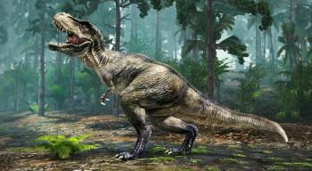 Fosilne kosti mladunčeta tiranosaurusa prodaje na internetu
