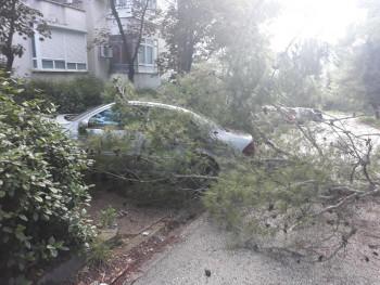 UDARI VJETRA U MOSTARU oborili stabla i nanijeli štetu