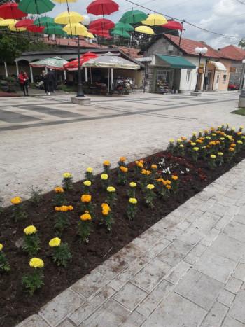 Sadnjom cvijeća uljepšali Nevesinje