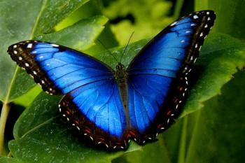 28. МАЈ: Свjетски дан лептира
