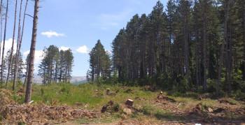 Trebaće decenije da se obnovi šuma na Košuti