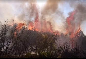 Nevesinje: Aktivan požar u Davidovićima – kuće nisu ugrožene