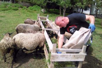 Supružnici uzgajaju neobično i rijetko voće, pčele i ovce