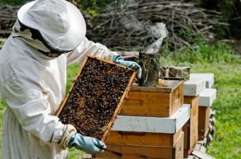 Najteža medonosna sezona za hercegovačke pčelare