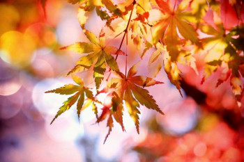 Stiže jesen