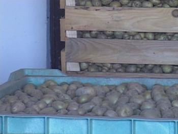 BiH: Otkup žitarica povećan za 57 odsto, a krompira za 107 odsto