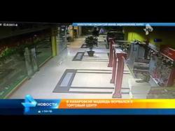 Medvjed provalio u tržni centar na istoku Rusije (VIDEO)
