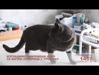 Pomozimo izgradnju azila za mačke (VIDEO)