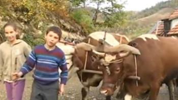 МЕДВЈЕД И ВУK ИМ 'ПРВЕ KОМШИЈЕ': Вриједни близанци Милица и Милан (13) живе ГОРШТАЧKИМ ЖИВОТОМ