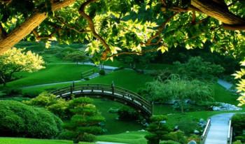 Naučnici: Više drveća i trave - duži život!