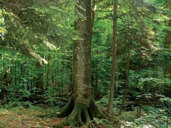 Gacko: Završeno jesenje pošumljavanje
