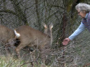 Љубав према животу и животињама - бака Невенка Бијелић 20 година одгаја срне