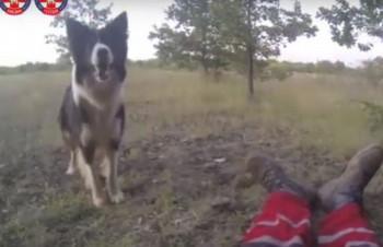 FLOKI SPASAVA ŽIVOTE: Pas heroj iz Čapljine sa spasiocima TRAŽI NESTALE