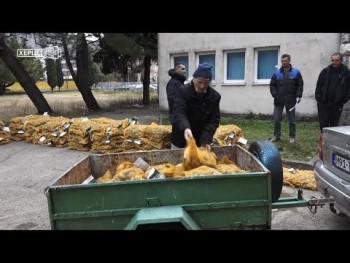 Agrarni fond: Pet tona sjemenskog krompira za 17 proizvođača (VIDEO)