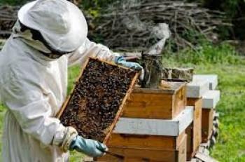Foča: U četvrtak predavanje o pčelarstvu