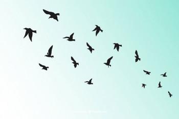 Pojedine vrste ptica u BiH otkazale svoj let