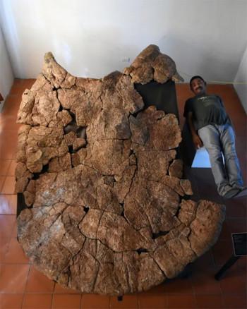 Pronađeni fosili kornjače veličine automobila
