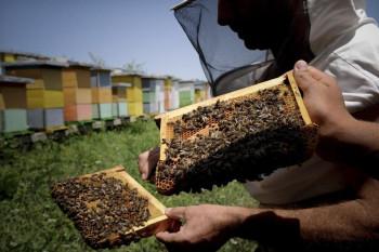 Bileća: Rezultati konkursa za podsticaj u pčelarstvu