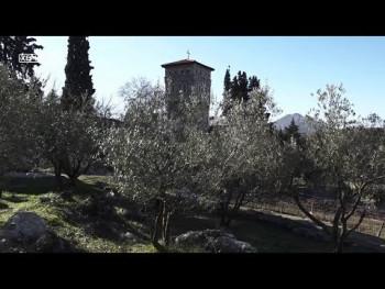 Tvrdoš: Proizvodnja maslinovog ulja po tradicionalnoj recepturi (VIDEO)
